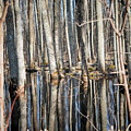 50 Shades Of Trees by Patricia Stauffer
