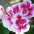 Summer Flowers by Elvira Ladocki