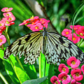 5050- Butterfly by David Lange