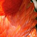 5060- Flamingo by David Lange