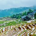 Longji Terraced Fields Scenery by Carl Ning
