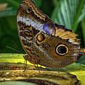 5113- Butterfly by David Lange