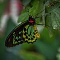 5156- Butterfly by David Lange