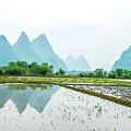 Karst Rural Scenery In Spring by Carl Ning