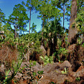 55- Everglades Afternoon by Joseph Keane