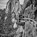 5807- Yellow Mountains Black And White by David Lange