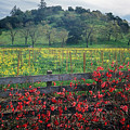5b6301 Vineyards Of Color by Ed Cooper Photography