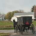 Amish Buggy by David Arment