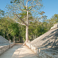 Ball Court At The Coba Ruins  by Carol Ailles