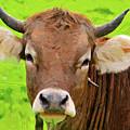 Bull by Anna J Davis