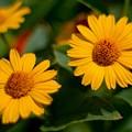Flower by Baltzgar