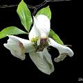 Flower by Diane Falk
