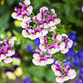 Flowering Garden.  by Gal Eitan
