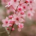 Flowers by Fabio Ferreira