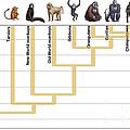 Human Evolution by Spencer Sutton