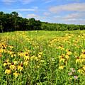 Marengo Ridge Wildflowers by Ray Mathis