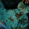 Octopus by Nina Banks