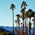 Palm Springs by Lisa Dunn