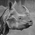 Rhino by FL collection