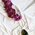 Silk Flower by Oren Shalev