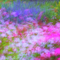 Summer Impression Series Panorama - Flowers by Ranjay Mitra