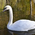 Swan by FL collection