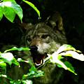 The Wild Wolve Group B by Debra     Vatalaro