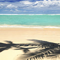 Tropical Beach by Elena Elisseeva