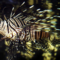 Tropical Fish  by Gunnar Orn Arnason