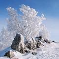 Winter by Dorothy Binder