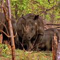 Zambia by Paul James Bannerman