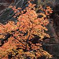 Zion Autumn Foliage by Pierre Leclerc Photography