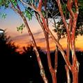 Sunset by William Copeland