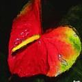 6.5 Heart   Artwork In Poster by Andrea N Hernandez