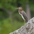 Birds by Karen Hart