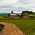 6x1 Philippines Number 123 Rice Fields Panorama by Rolf Bertram
