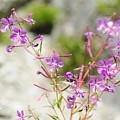 Alpine Wildflower by Ilan Rosen