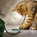 Cat by Vadim Pavlov