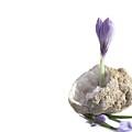 Crocus Flower In Quartz Geode by Stela Knezevic