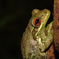 Frog by Larah McElroy