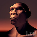 Homo Erectus by Science Picture Co