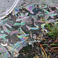 7. Ice Prismatics And Heather, Slaley Sand Quarry by Iain Duncan