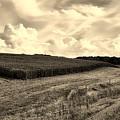 Iowa Cornfield by L O C