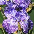 Iris by Patrick  Short