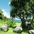 Keanae Maui Hawaii by Sharon Mau