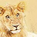 lioness Masai Mara, Kenya by Humorous Quotes