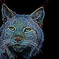 Lynx by Robert Kinser