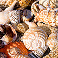 Mix Group Of Seashells by Anthony Totah