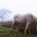 New Forest - England by Joana Kruse
