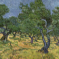 Olive Orchard by Vincent Van Gogh